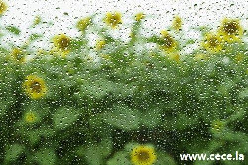 周公解梦梦见湿风