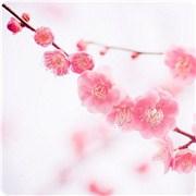 2017年你能获得爱情的桃花吗